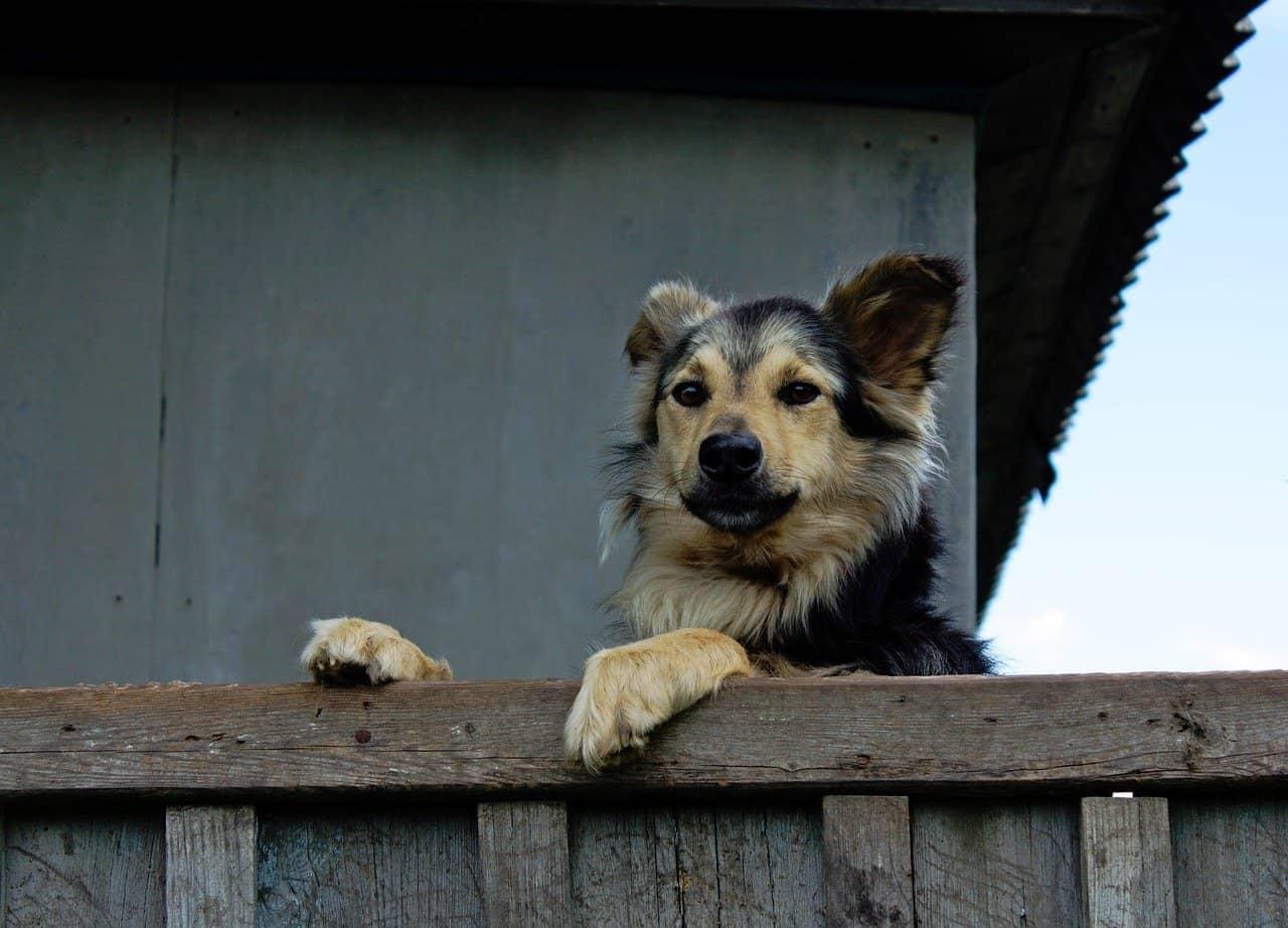 chien sur une clôture